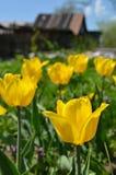 Gele tulpen in de lentedag Royalty-vrije Stock Foto's