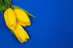 Gele tulpen en blauw document Stock Foto