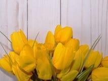 Gele tulpen met een witte achtergrond Stock Afbeelding