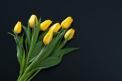 Gele tulpen op donkere achtergrond Royalty-vrije Stock Afbeelding
