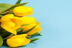 Gele tulpen op een blauw Stock Afbeeldingen