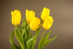 Gele tulpen op een grijze oppervlakte Stock Afbeelding