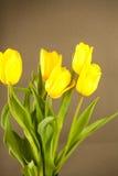 Gele tulpen op een grijze oppervlakte Royalty-vrije Stock Afbeelding