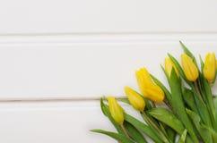 Gele tulpen op witte raad Stock Fotografie