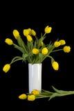 Gele tulpen in witte vaas, 3 scheiden Stock Foto