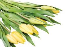 Gele tulpenbloemen Royalty-vrije Stock Foto's