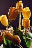 Gele tulpenbloemen in waterplonsen Stock Foto