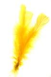 Gele veer Stock Afbeeldingen