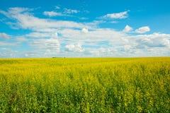 Gele verkrachtingenbloemen op het gebied en de blauwe hemel met wolken royalty-vrije stock afbeelding
