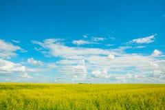 Gele verkrachtingenbloemen op het gebied en de blauwe hemel met wolken royalty-vrije stock fotografie