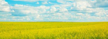 Gele verkrachtingenbloemen op het gebied en de blauwe hemel met wolken Royalty-vrije Stock Foto