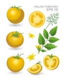 Gele verse tomaten Royalty-vrije Stock Afbeeldingen