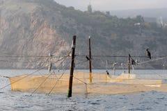 Gele visnetten die op hen aalscholvers en meeuwen zitten Stock Afbeelding