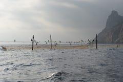 Gele visnetten die op hen aalscholvers en meeuwen zitten Royalty-vrije Stock Foto's