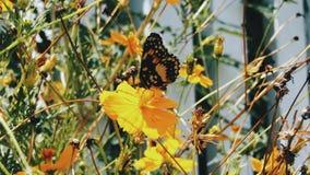 gele Vlinder Stock Afbeeldingen