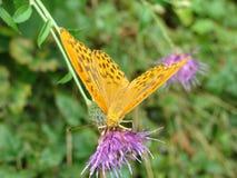 gele Vlinder Stock Afbeelding