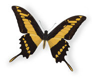 Gele vlinder die op wit wordt geïsoleerd Royalty-vrije Stock Afbeeldingen