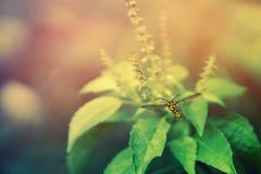 Gele vlinder met groene bladeren en de aardrug van de bloemlente Royalty-vrije Stock Foto