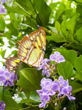 Gele Vlinder van onderaan Stock Foto's
