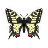 Gele vlinder vectordieillustratie op witte backgroun wordt geïsoleerd Stock Foto's