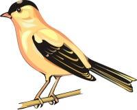 Gele vogel Stock Afbeelding