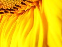 Gele waterval royalty-vrije stock fotografie