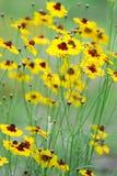 Gele weelderige bloemen royalty-vrije stock afbeeldingen