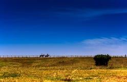 Gele weiden onder blauwe hemel en wihte wolken stock afbeelding