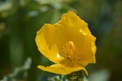 Gele wilde bloem Stock Foto's