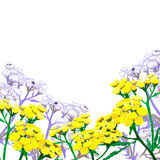 Gele wilde bloem Royalty-vrije Stock Foto