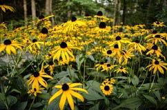 Gele wilde bloemen Royalty-vrije Stock Foto