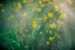 Gele wilde bloemen in de zomerregen stock foto's