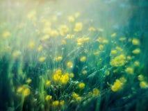 Gele wilde bloemen na regen royalty-vrije stock afbeelding