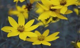 Gele wildflowers Stock Fotografie