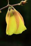 Gele wildflowers. Royalty-vrije Stock Fotografie