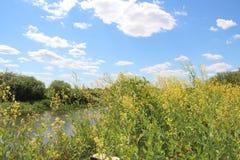 Gele wildflowers Stock Afbeelding