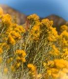Gele wildflowers Stock Afbeeldingen