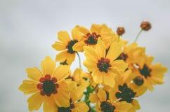 Gele wildflowers Royalty-vrije Stock Fotografie