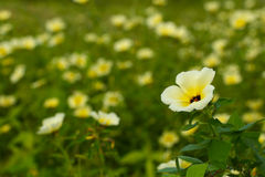 Gele wildflowers 2 Stock Afbeelding