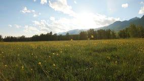 Gele wildflowers op de weide stock video