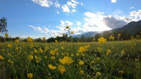 Gele wildflowers op de weide stock footage