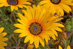 Gele wildflowers van het de lentemadeliefje royalty-vrije stock fotografie