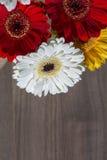 Gele witte en rode gerberabloemen op de houten achtergrond Royalty-vrije Stock Foto's