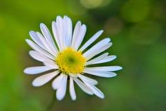 Gele witte groen Stock Foto's