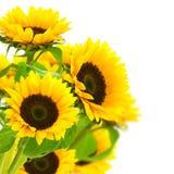 Gele zonnebloemengrens Stock Afbeelding