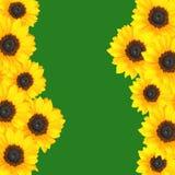Gele zonnebloemengrens Royalty-vrije Stock Foto