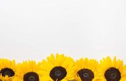 Gele Zonnebloemenrij Royalty-vrije Stock Afbeeldingen