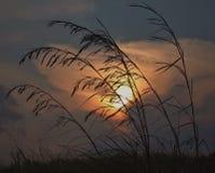 Gele zonneschijn Stock Foto