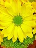 Gele zonneschijn Royalty-vrije Stock Foto's