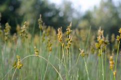 Gele Zubrovka-bloem in het centrum met onduidelijk beeld rond de randen royalty-vrije stock foto's